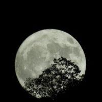 満月 NIKON COOLPIX P900